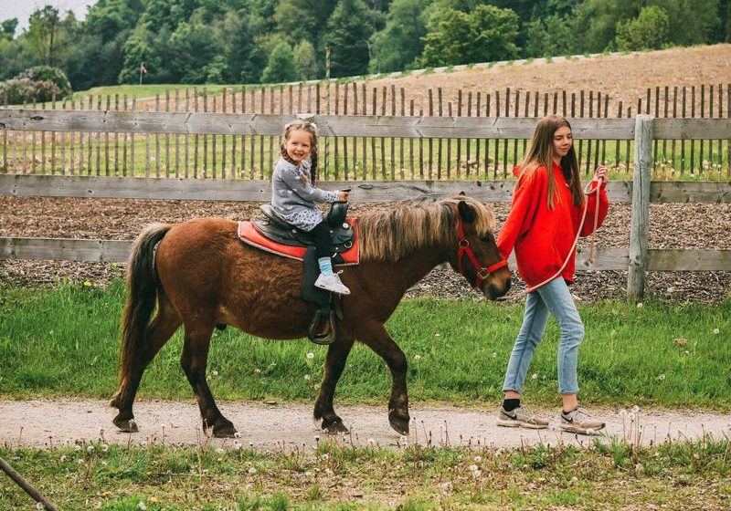 Tips for making animal riding safely